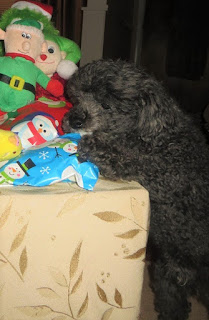 Toy Poodle Christmas