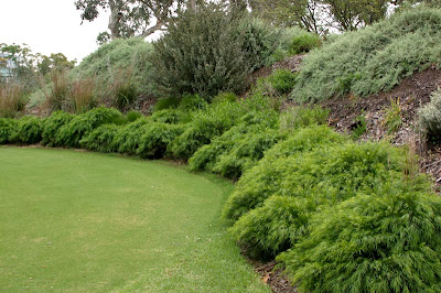 A Garden Haven Acacia Mini Cog Pbr