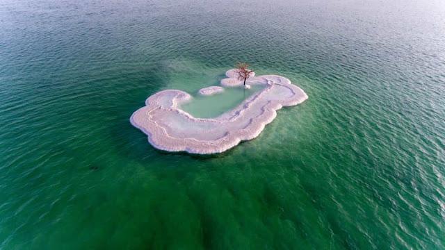 Mar Muerto, El Árbol del Mar Muerto, ¿Qué es el mar muerto?, Triste verdad detrás del árbol del mar muerto