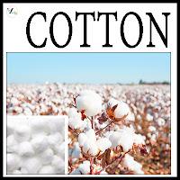 Cotton Varieties