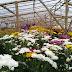 Kebun Bunga Setiya Aji, Destinasi di Semarang yang Menawarkan Kesejukan Alami