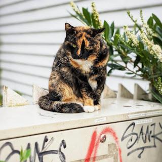 Things to do in Bergen: befriend Bergen cats