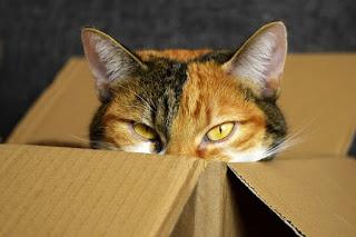 Cara Membuat Mainan Kucing dari Kardus