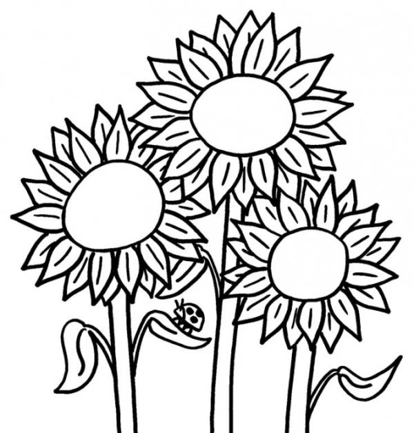 Belajar Mewarnai Bunga Matahari Untuk Anak