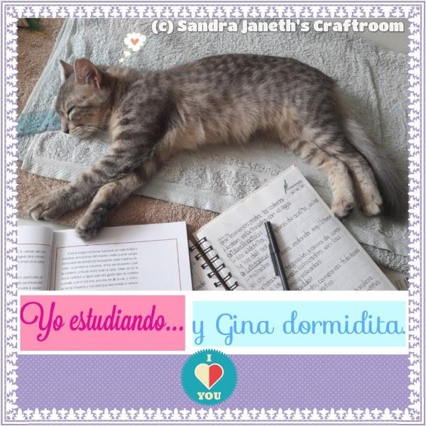 Gatos, Gina, Mascota