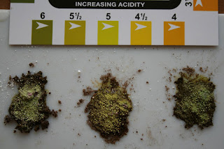 soil_test%2Bwith%2Bacid%2Bsoil.jpg