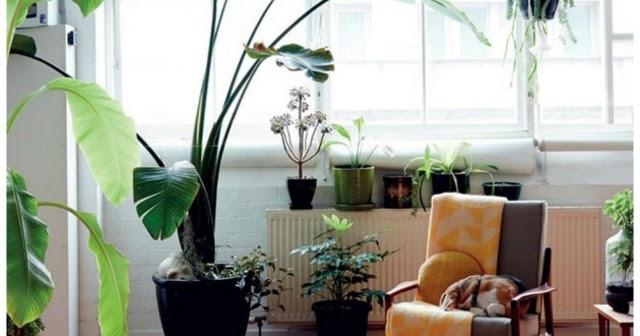 Home garden 40 id es pour d corer son int rieur avec des plantes - Decorer terras avec plantes ...