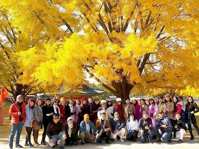 Lịch dự báo mùa lá đỏ - lá vàng rực rỡ nhất ở Hàn Quốc