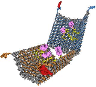 Nano-robot per colpire solo le cellule-tumorali | Giuseppe Benanti