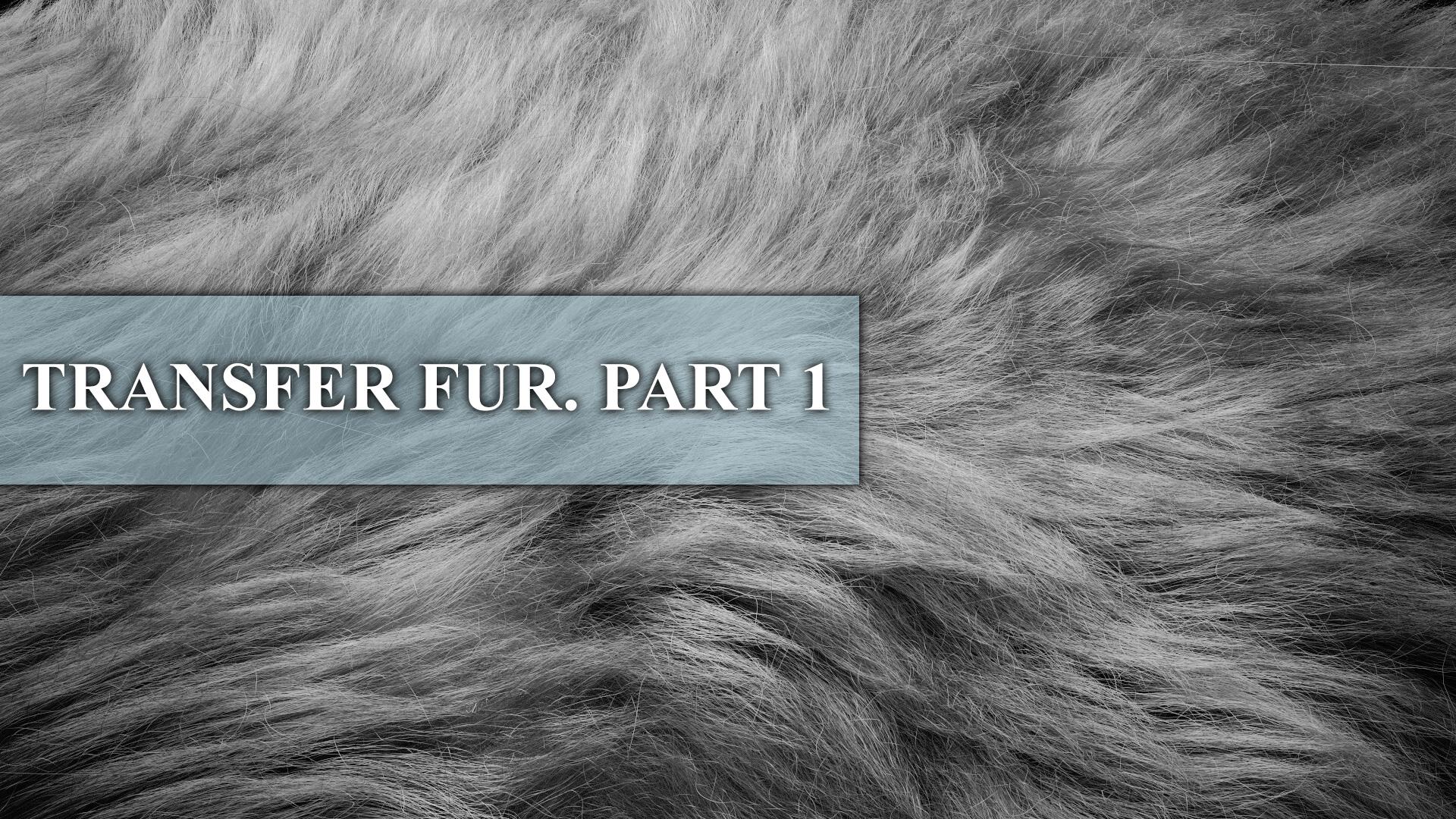 TRANSFER_FUR_PART1_YOUTUBE.jpg