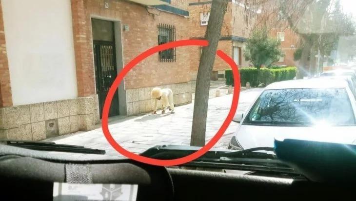 Hombre se disfraza de perro para salir a la calle y evitar multa en cuarentena