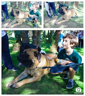 Adestrar cães - São Paulo