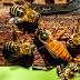 Έτσι καθορίζουν οι μέλισσες τη βασίλισσά τους