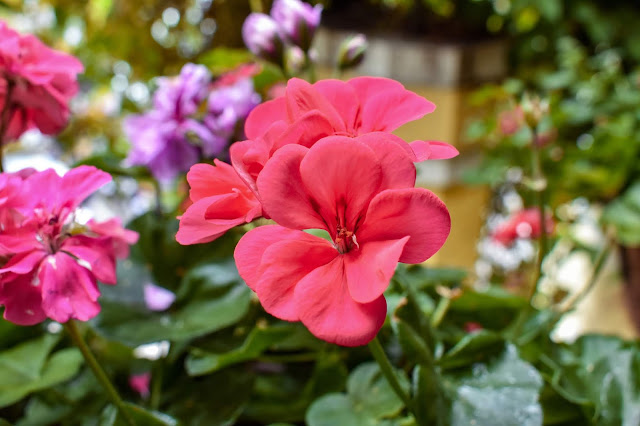 Naples plants