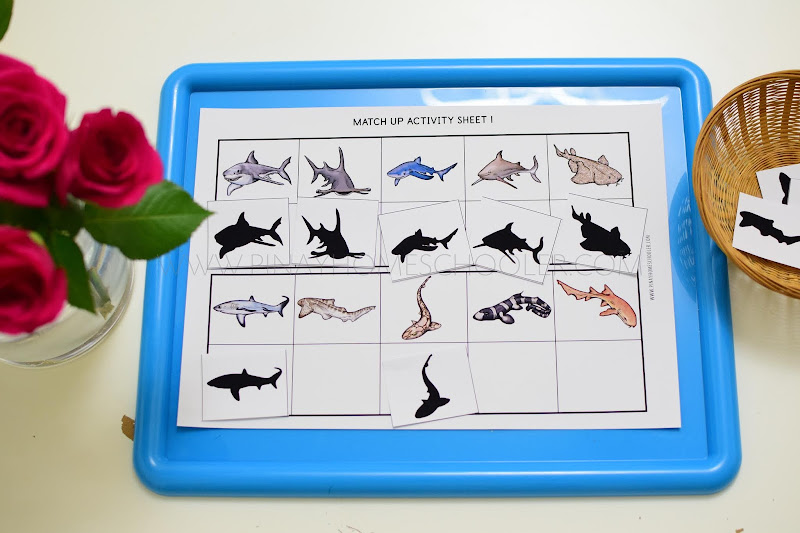 Sharks Themed Unit: Matching Shadows and Memory Game