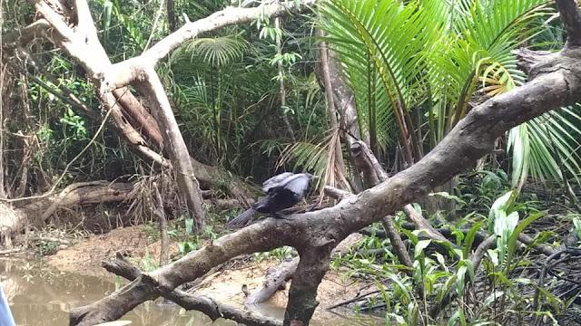 นอกจากงูยัง มีนกหลากหลายชนิด นกเด้าดินนกกระเต็น ที่เป็นจุดเด่นคือ นกเงือก ที่เป็นสัตว์สงวนหายาก