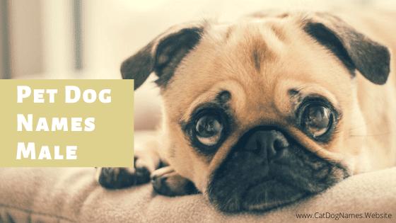 Pet Dog Names Male: Top Unique Boy Dog Names List of 2020