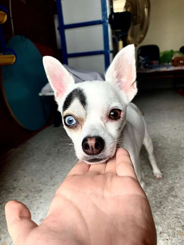 Cute Pictures Of Dog With Two Different Eyes Go Viral