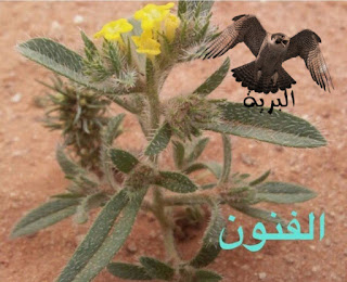 نبات الفنون