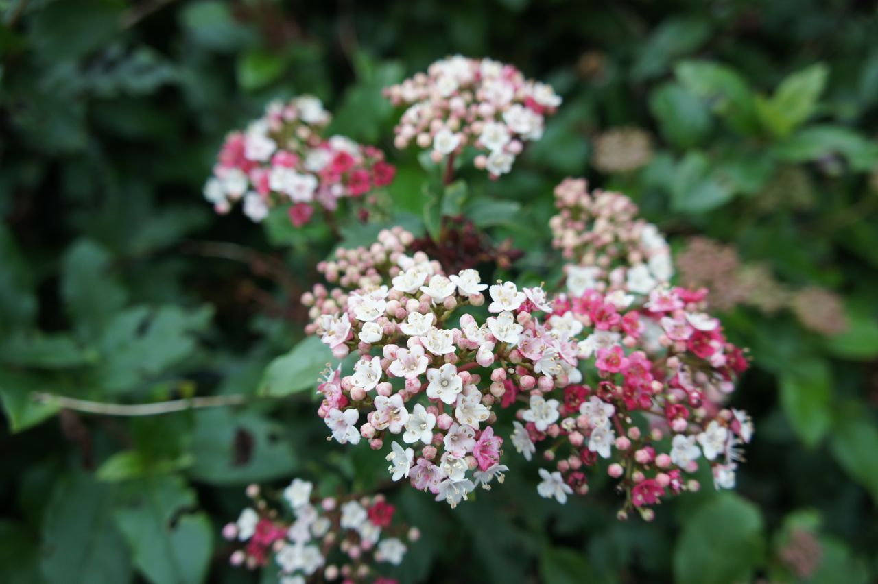 Foragefor... news: Winter Flowering Shrubs