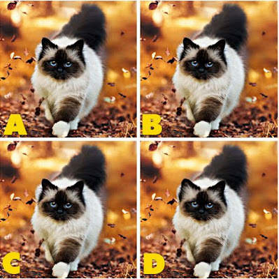 Which image is different? image 38