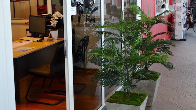 Kunstplanten kopen of huren cactus ficus grassen bamboe jungle lavendel mat outlet riet shop showroom uv- bestendig in Hasselt Limburg Antwerpen Vlaams-Brabant