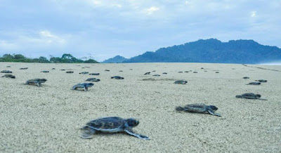 Sukamade Beach, Ijen Crater Tour Package 3 Days