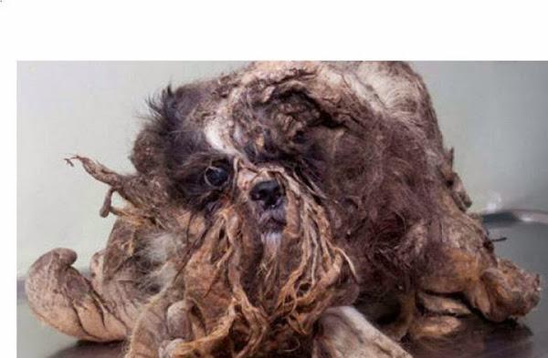 Este pequeño perro abandonado estaba tan sucio que apenas parecía un animal