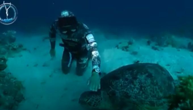 Puglia: faccia a faccia con la tartaruga gigante