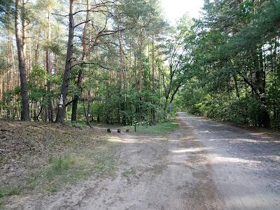 Ścieżka schodzi z drogi palmirskiej wraz ze szlakiem niebieskim
