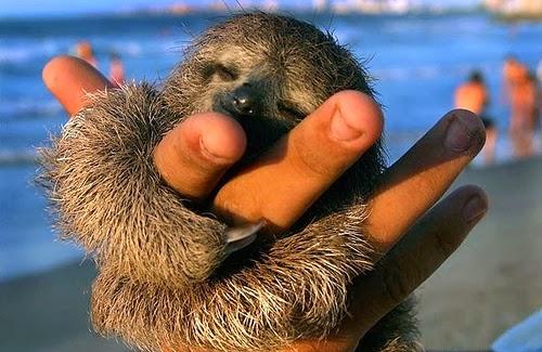 tinny animals on fingers 2