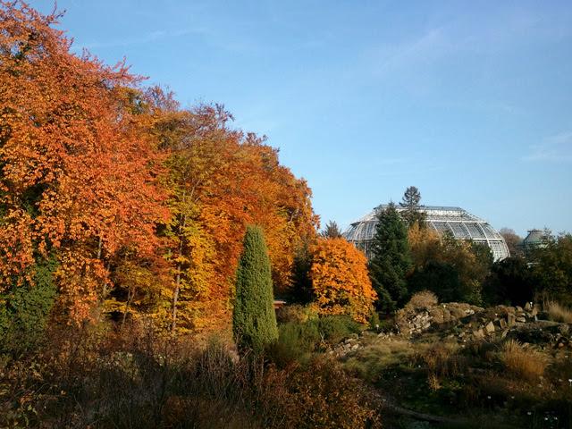 Reisetageblog Bunte Weltreise Herbst Im Botanischen Garten Berlin