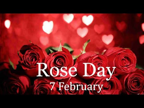 rose day friends