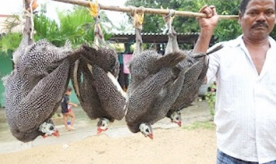 Guinea Fowl Recipe Prepared by My Daddy | DADDY VILLAGE FOOD