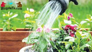 Cara menyiram tanaman yang benar saat musim kemarau