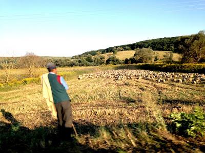 Pasterze w Rumunii