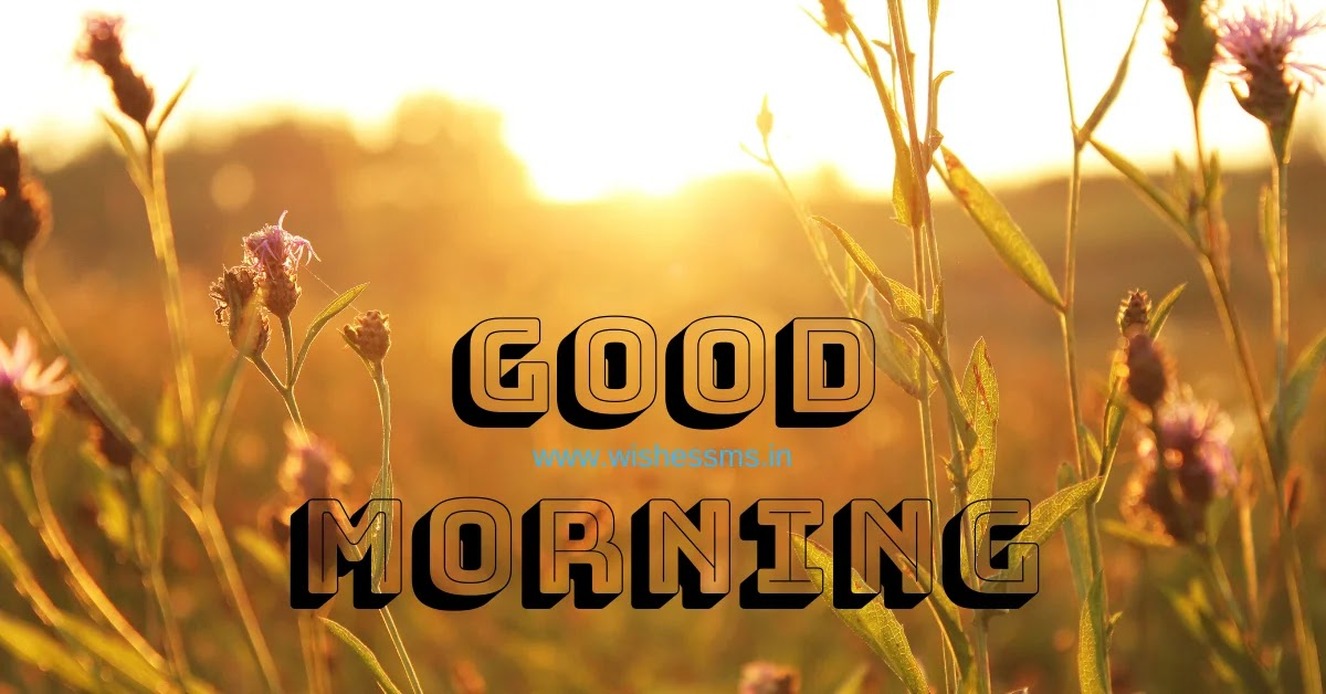 good morning wishes in gujarati, gujarati ma good morning message, good morning gujarati image, good night message in gujarati, good morning gujarati photo, good morning in gujarati style, good morning thoughts gujarati, gujarati good morning suvichar