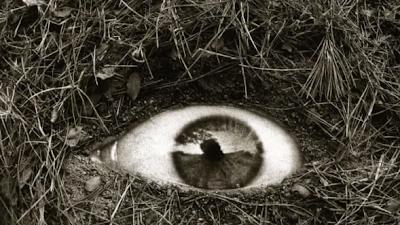 Resultado de imagen de Joan Fontcuberta