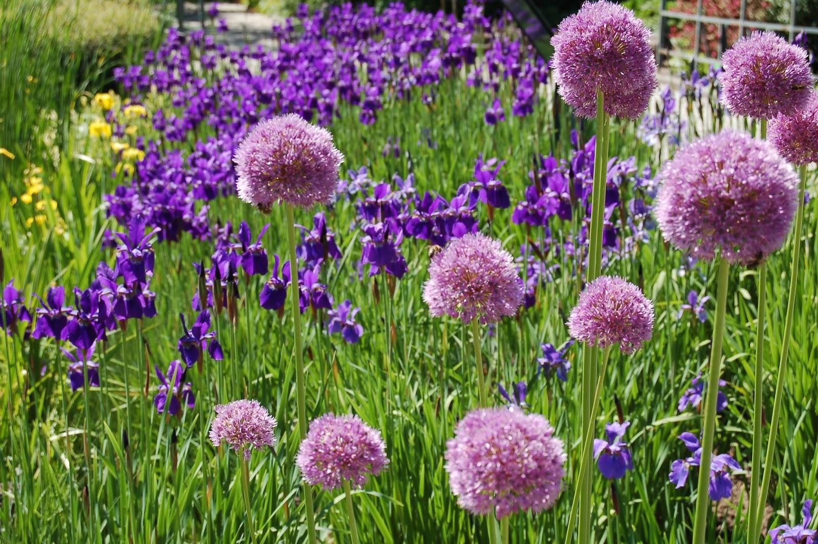 Kwietny raj, roślinne zbiorowisko … ARBORETUM w Bolestraszycach BOLESTRASZYCE Podkarpacie