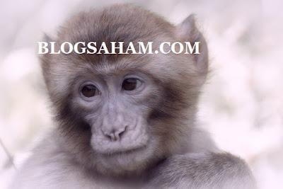 blogsaham