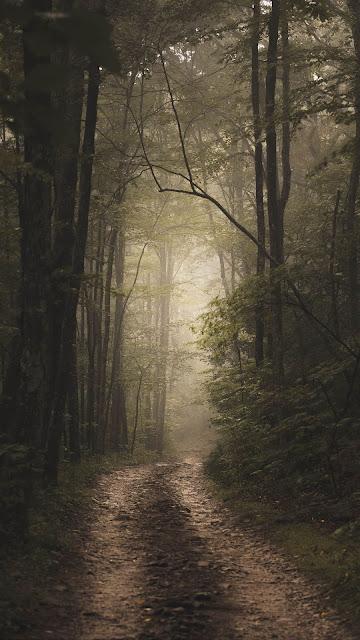 Forest, fog, road, nature
