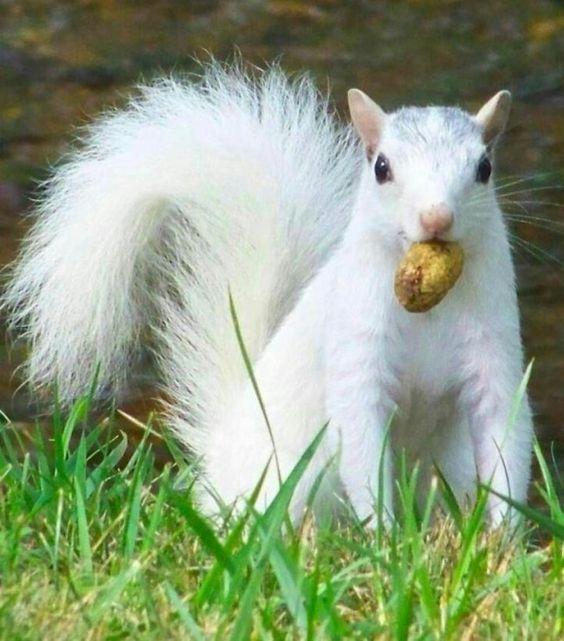 Squirrel | A-Z List of 125 Rare Albino Animals [Pics]