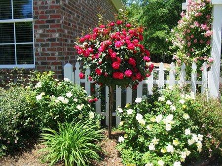 Tường rào hoa hồng kiểu đơn giản