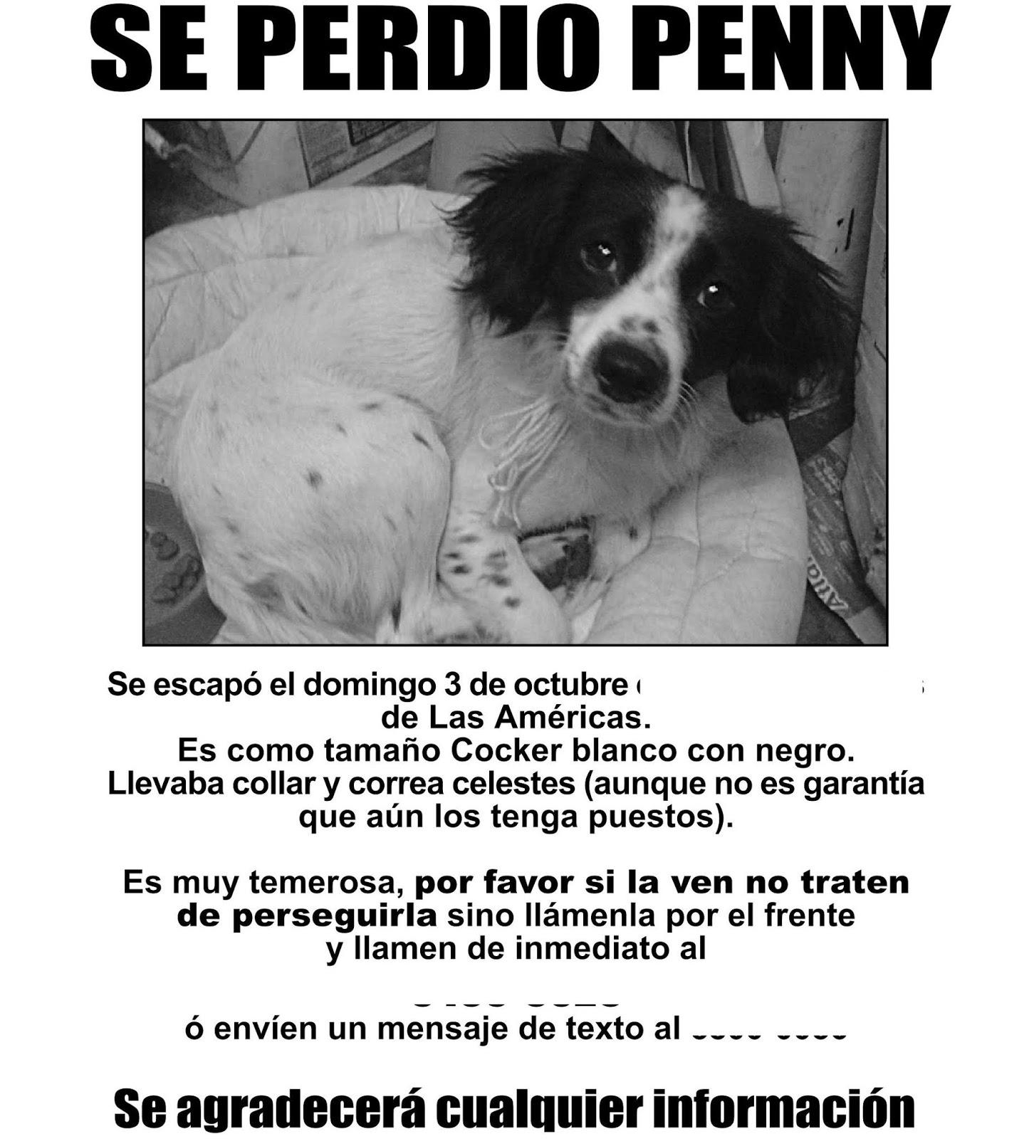 Los avisos de mascotas perdidas sirven para los planes de personas inescrupulosas / WEB REFERENCIAL