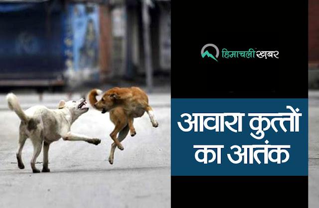 काँगड़ा : सड़क किनारे बैठे कुत्तों ने कर दिया दस साल की बच्ची पर हमला
