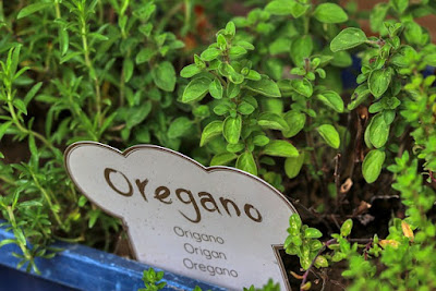 vegetables that grow in shallow containers