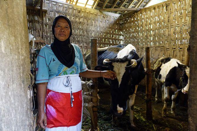 Sebagian besar masyarakat Desa Menari Tanon adalah peternak dan petani