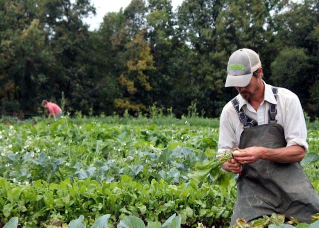 عمل المزرعة