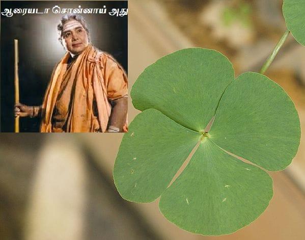 ஆரைக்கீரை - Aarai Keerai - European water clover.