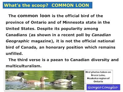 common loon; Gavia immer; Muskoka; Canada; Giorgio Coniglio